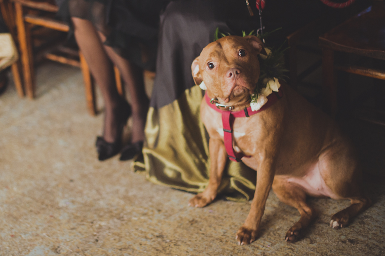 Asylum Peckham Wedding ceremony - dog